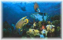 Explore the marvelous underwater world of the great Mayan reef in Isla Mujeres