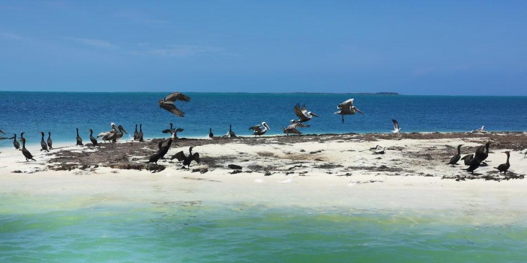Isla Blanca birds